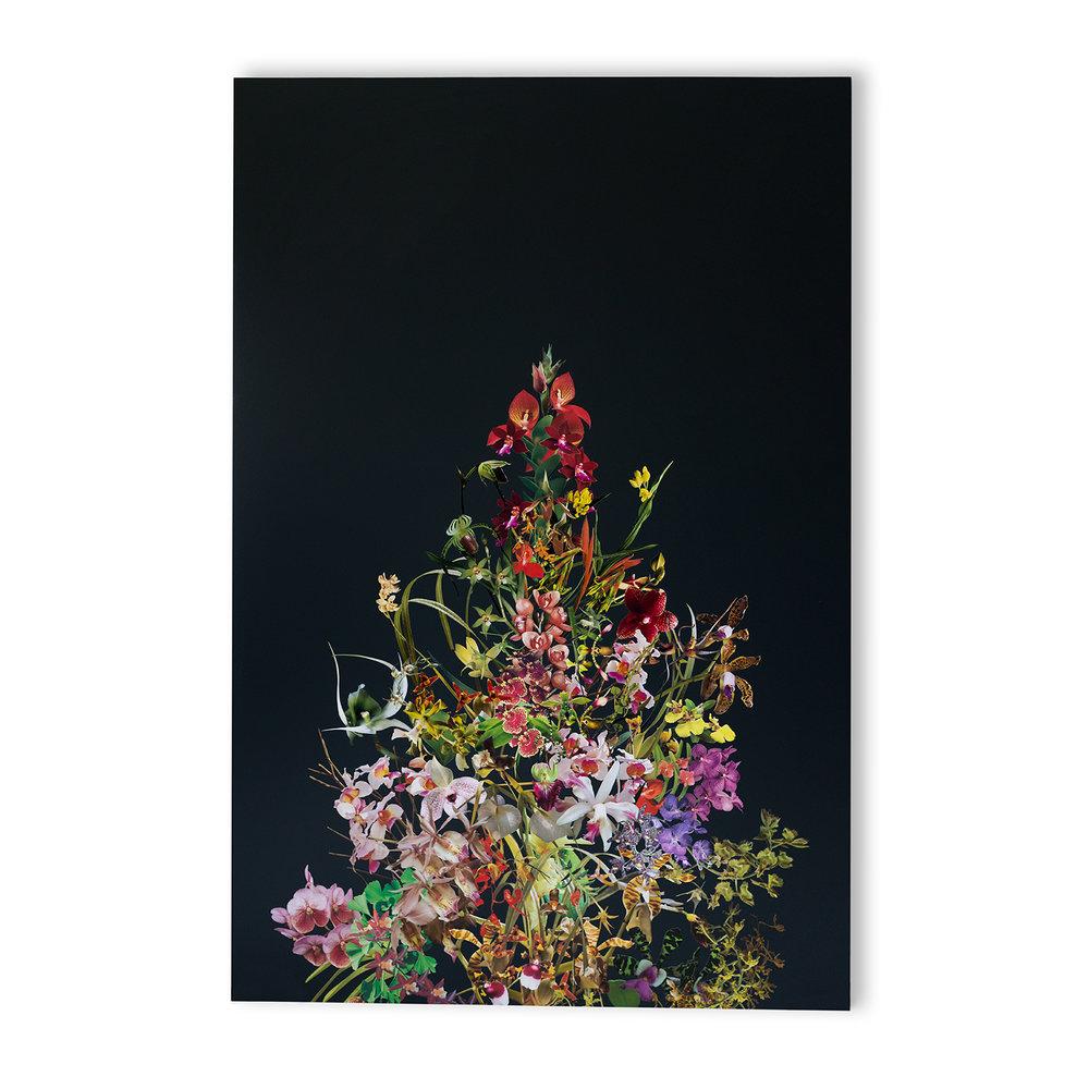 StephenEichhorn-Orchids-14.jpg