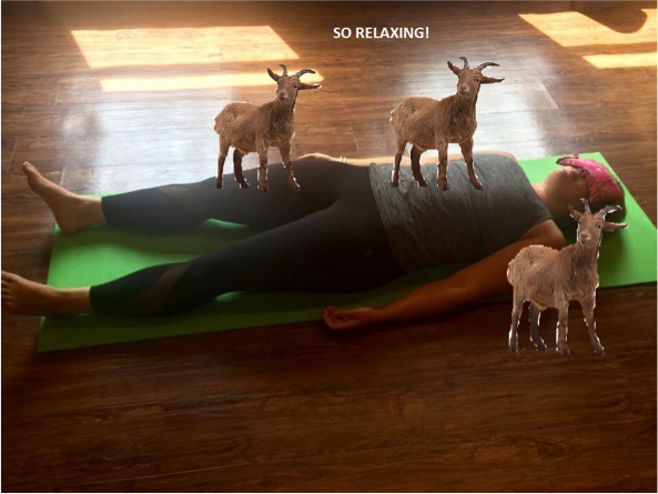 - By the way, I am a certified Goat Yoga instructor and would love to take your money I MEAN CURE YOUR BACK.  Sign up now!