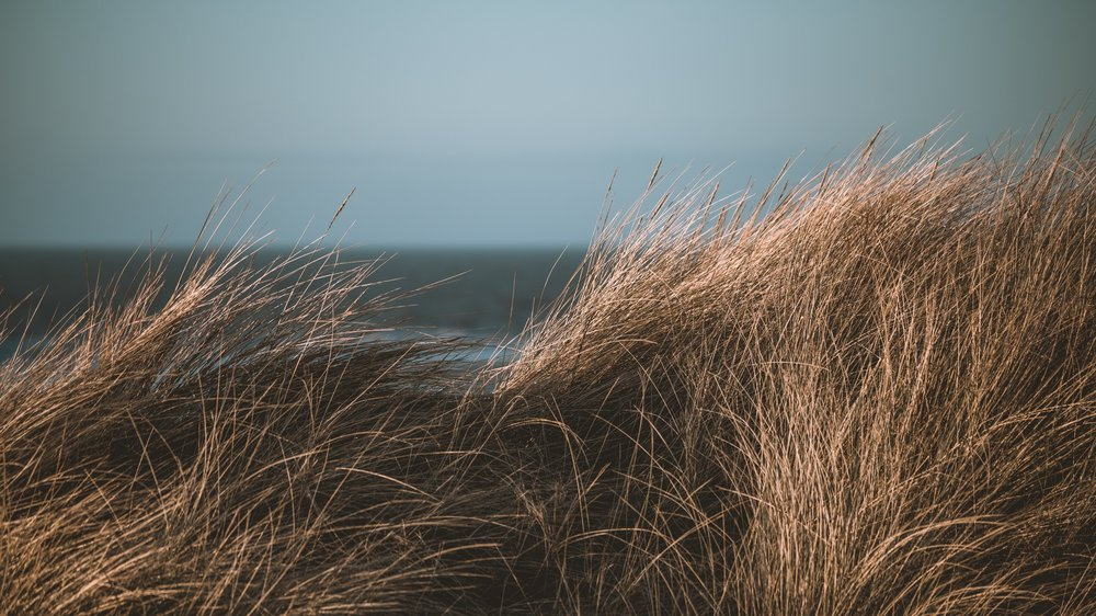 Beachgrass Brown - Inspired by the Atlantic coast line