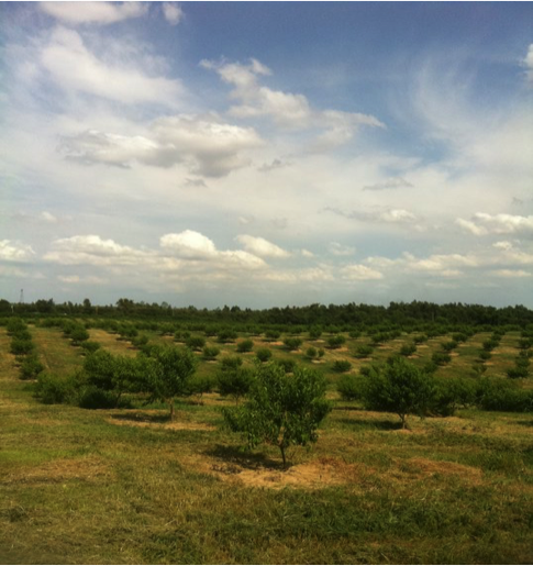 Pictured is Bader's Peach Farm