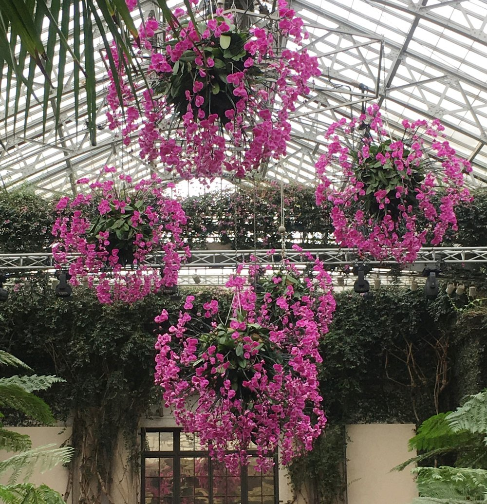 The photo doesn't do justice to these hanging baskets of orchids