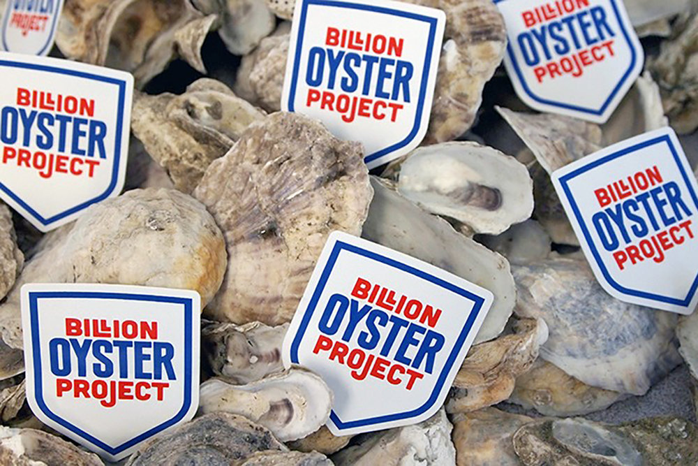 uc-murray-fisher-billion-oyster-project.jpg