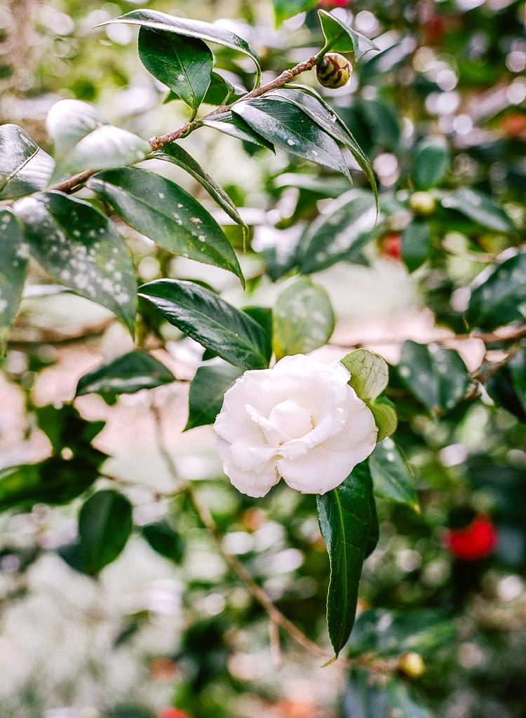 Lauren Galloway   Bok Tower Gardens Engagement   Florida, Nashville, South Carolina Wedding Photographer