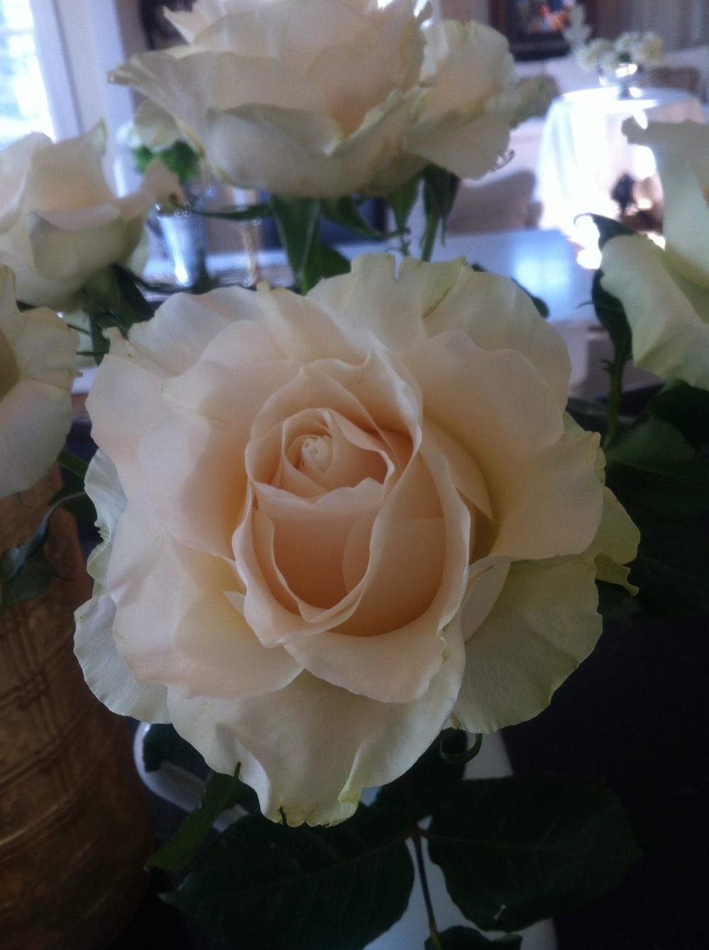 Always Roses