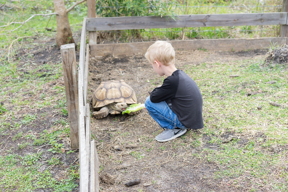 boy-feeding-turtle