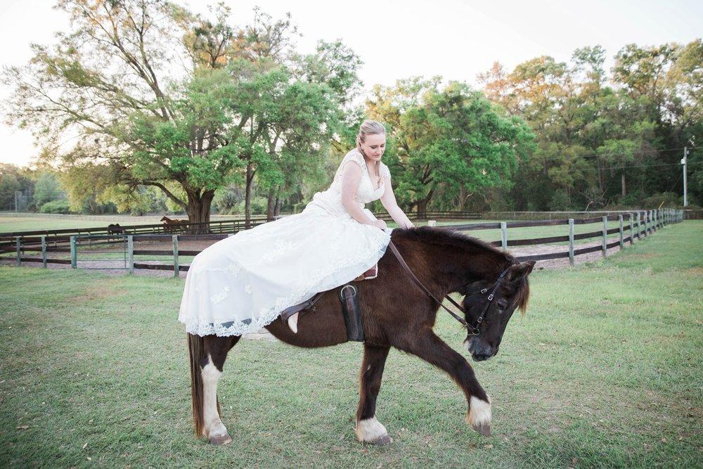 ocala-horse-farm