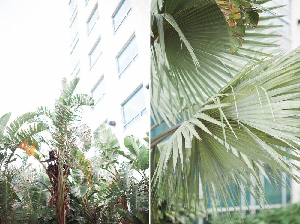 orlando-florida-palm-trees