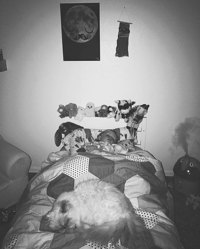 All of her animals tucked safely in bed with their furry protector at their feet. #lennonandoliver