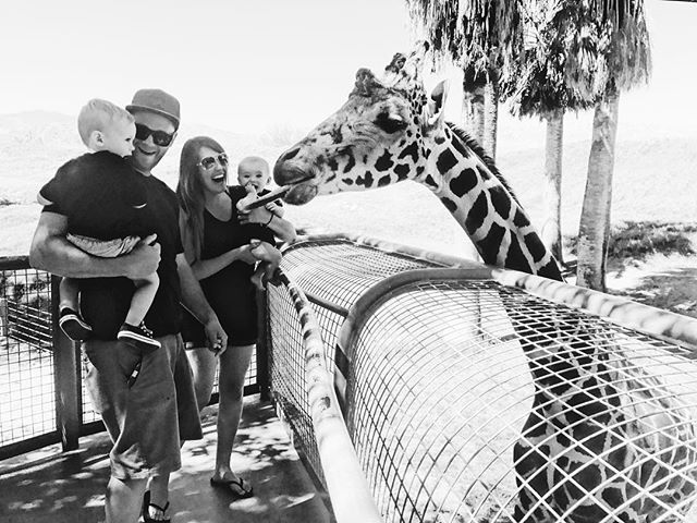 ||Day in the life of Nicole|| We got to feed Giraffes!! Real life Giraffes 😭 And it was amazing! If you are ever vacationing the Palm Springs area be sure to check out @thelivingdesert . You won't regret it!  #theadventerouslife