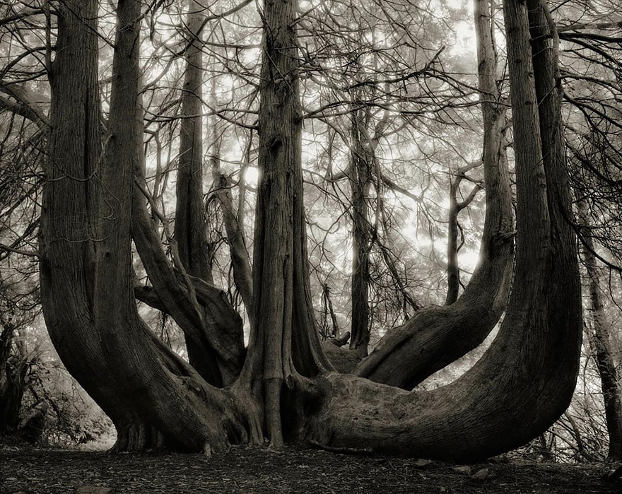 beth moon ancient trees