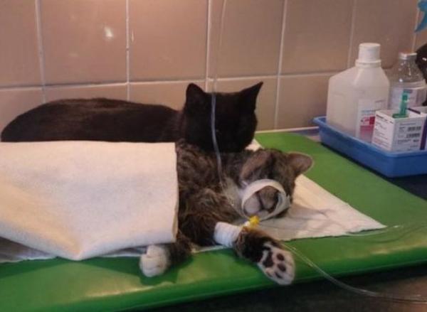 nurse cat w cat