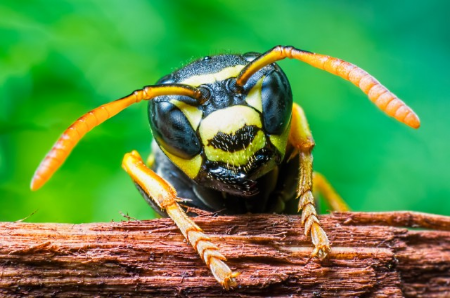 Polybia Paulista: the brazilian wasp's whose venom may target only cancerous cells