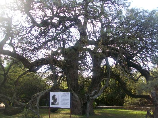 Photo source:http://g.cz/10-nejstarsich-stromu-sveta