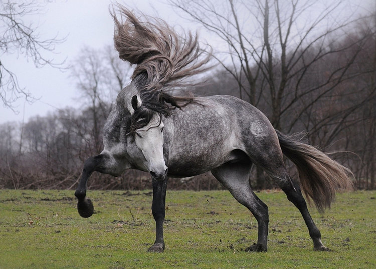The 10 Most Beautiful Horse Breeds in the World! — we love ... - photo#13