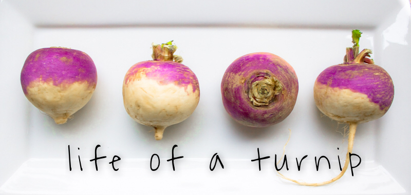 Life of a Turnip