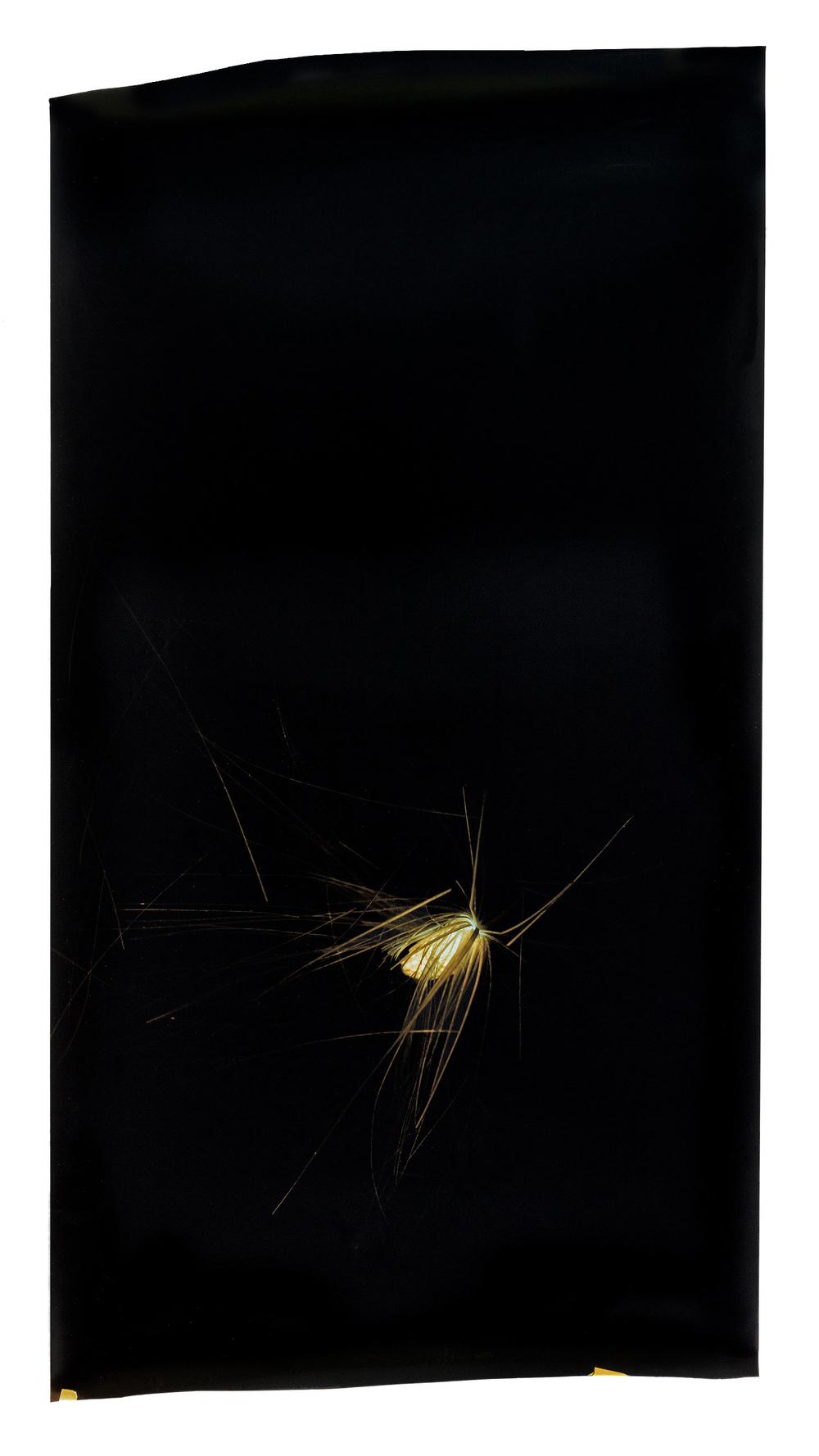 Household Specimen #06: Artichoke Seed