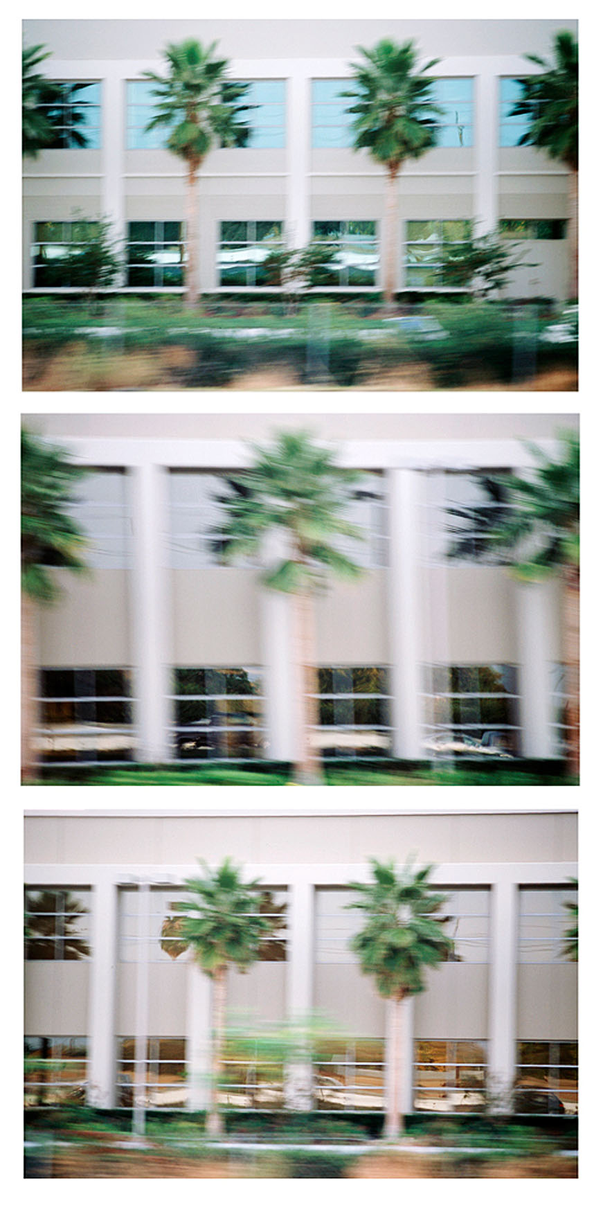 Palm Trees, I-880, San Jose, CA