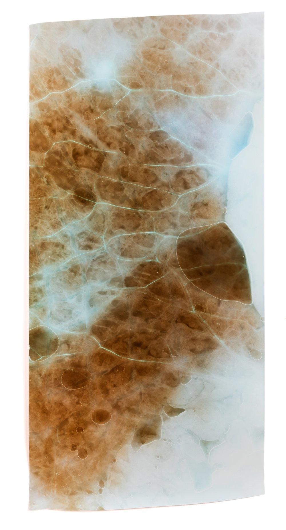 Skin from a ROCKY® Free Range Chicken Thigh