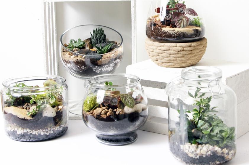 terrariums.jpg
