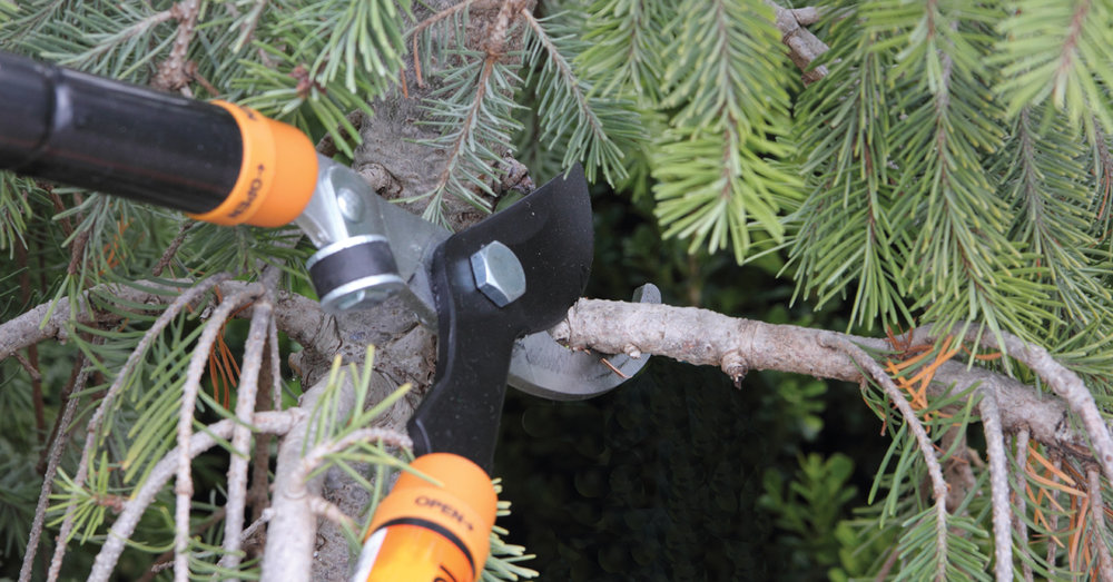 winter-pruning