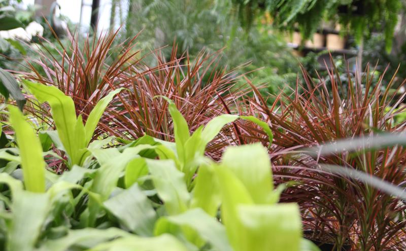 prairiegardens-houseplant