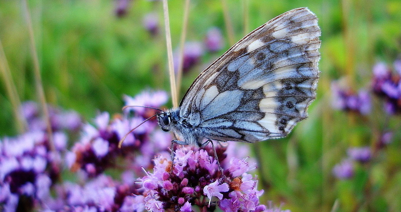Hereu0027s How You Can Pull Off Your Very Own Butterfly Garden With Tips From  Prairie Gardens Plant Experts.