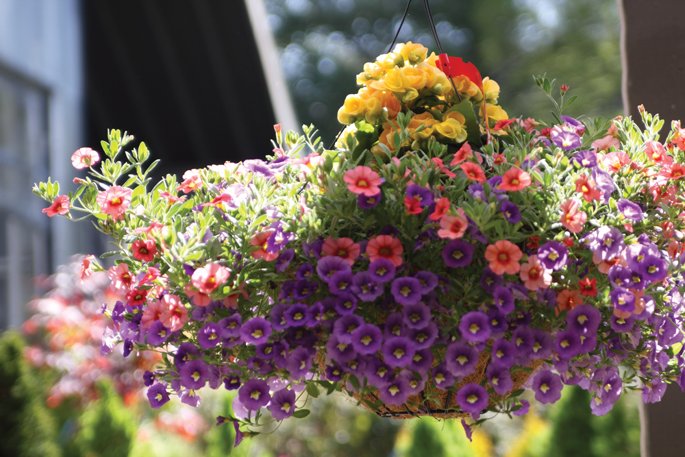 Save 25% off ALL Hanging Baskets and Flowering Planters at Prairie Gardens, Champaign IL
