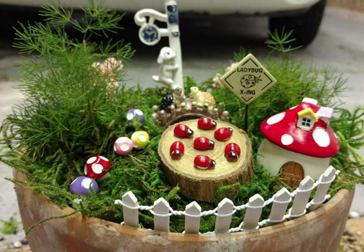 LADYBUG GARDEN. Shared By: Pam H