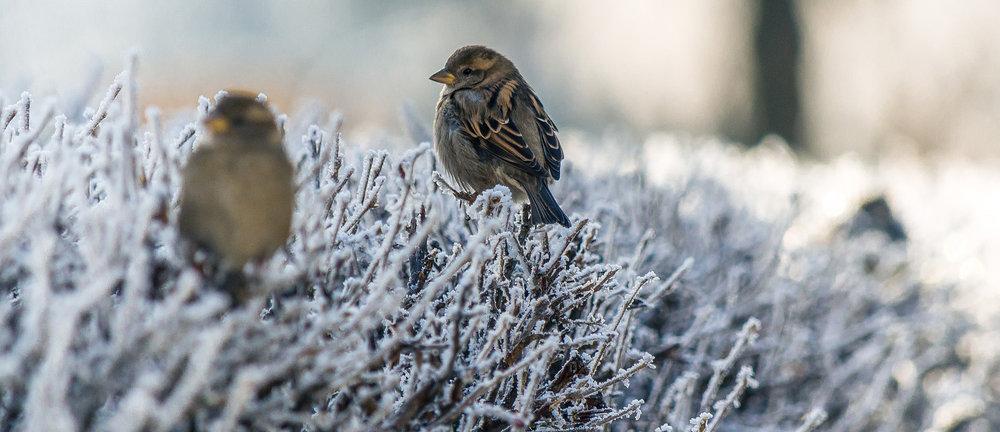 snow-cropped-birds.jpg