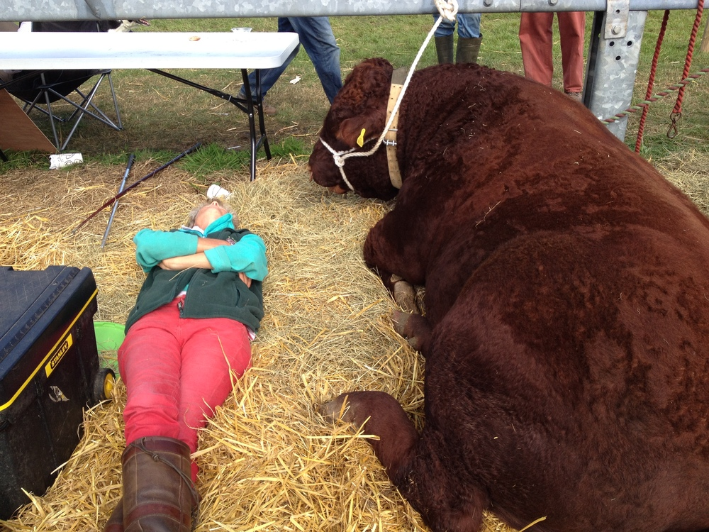 Everyone working hard at an agricultural show :)