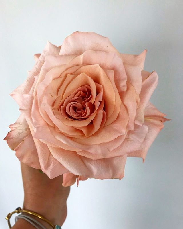 Everything's peachy 🍑 :) #roses #peach