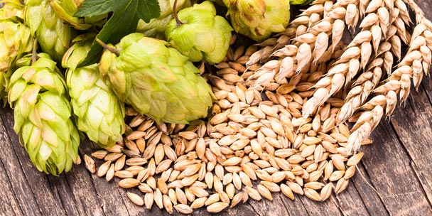 What four primary ingredients are used to make beer? — Tapville Social