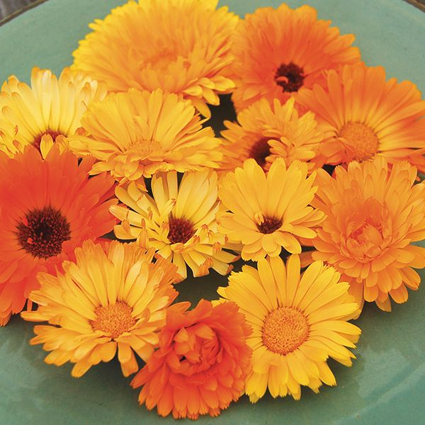 Pacific Beauty Calendula Blend