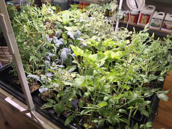OrganicplantsQueens
