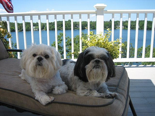 Beijing and Tai Chi chilling out on Cape Cod