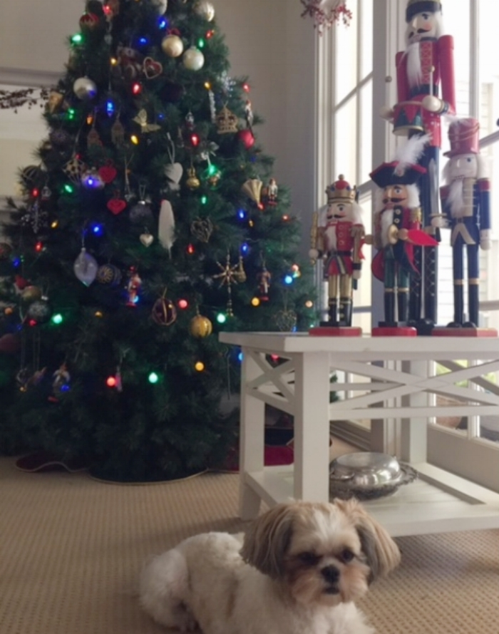 <Our Canadian Tree...and my little girl. Notice the cockatoo feather?>