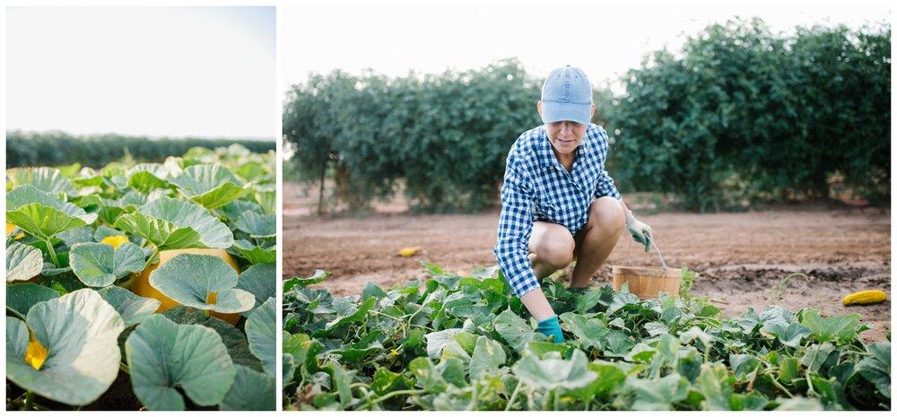 Reimer Farms__Lubbock Texas produce garden_01.jpg