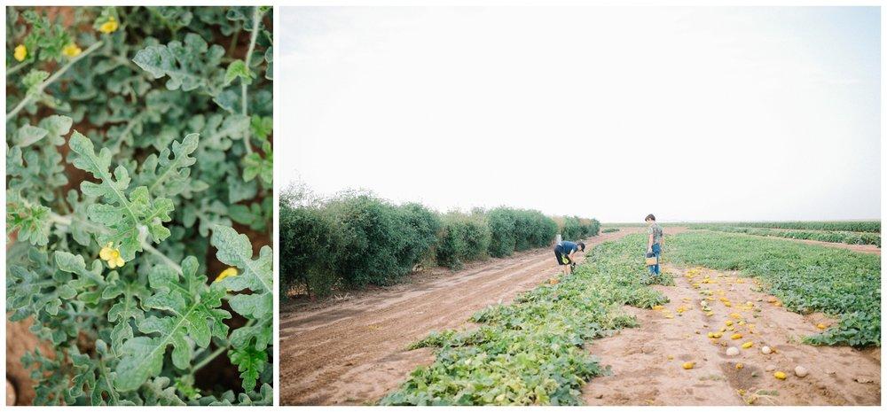 Reimer Farms__Lubbock Texas produce garden_02.jpg