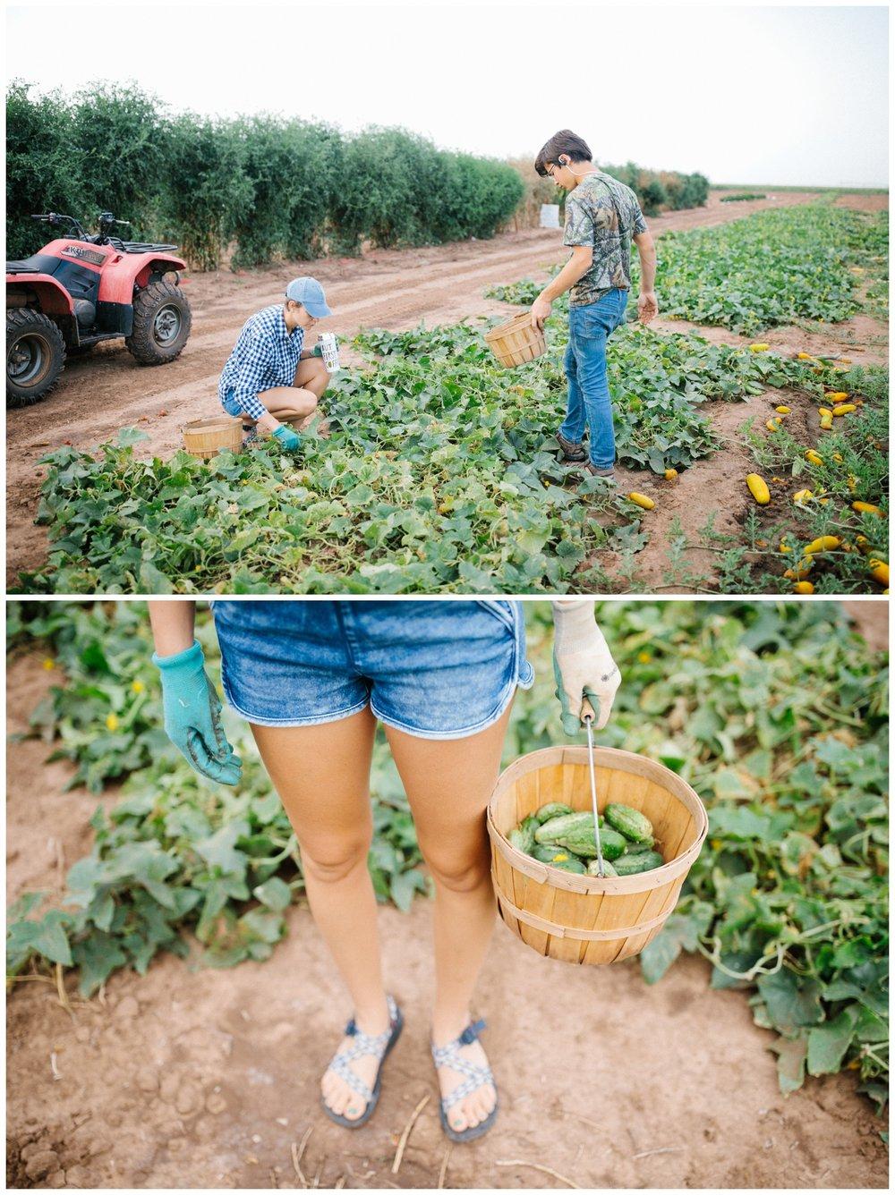 Reimer Farms__Lubbock Texas produce garden_05.jpg