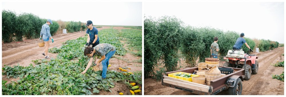 Reimer Farms__Lubbock Texas produce garden_07.jpg
