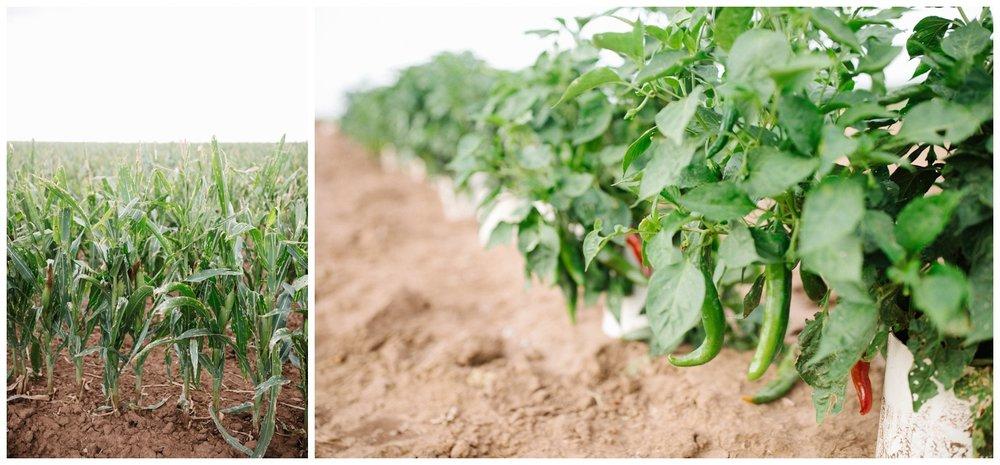 Reimer Farms__Lubbock Texas produce garden_11.jpg