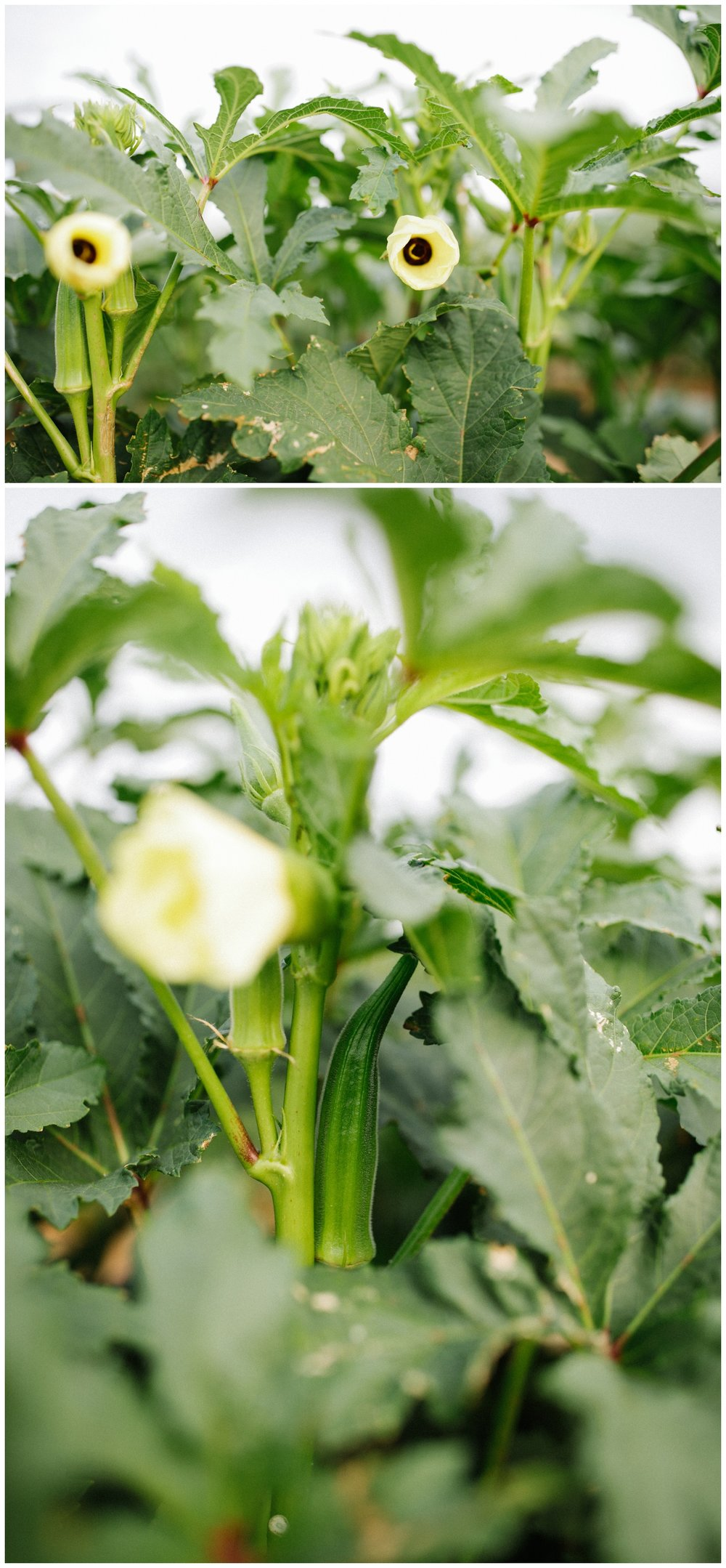 Reimer Farms__Lubbock Texas produce garden_19.jpg