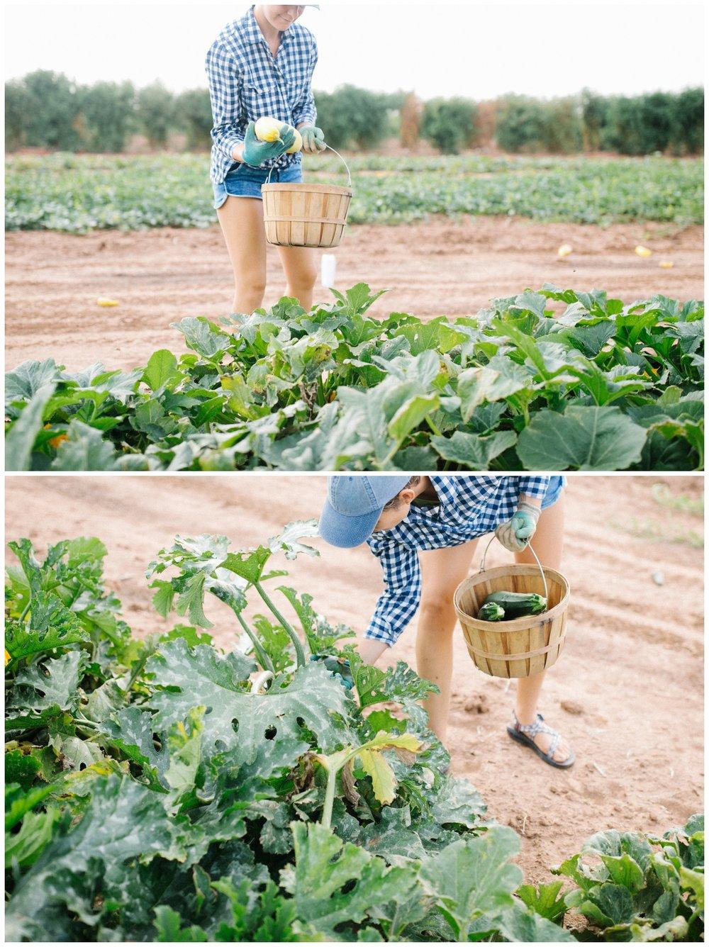 Reimer Farms__Lubbock Texas produce garden_21.jpg