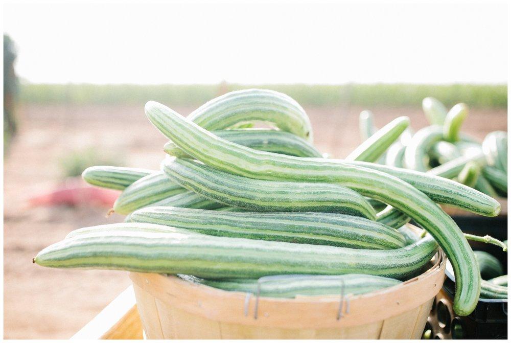 Reimer Farms__Lubbock Texas produce garden_27.jpg