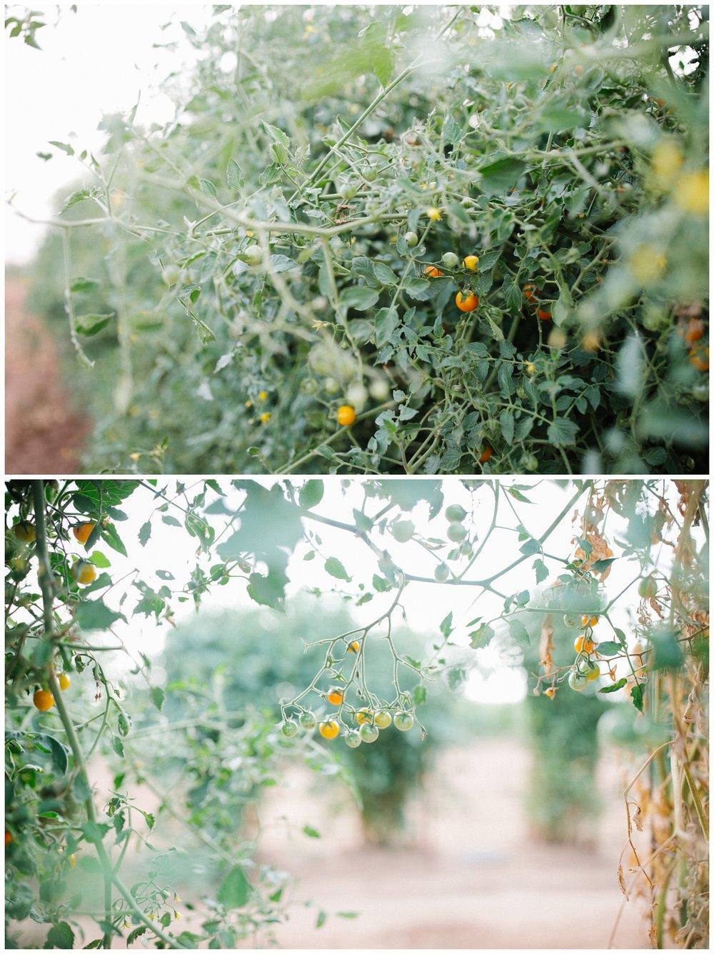 Reimer Farms__Lubbock Texas produce garden_29.jpg
