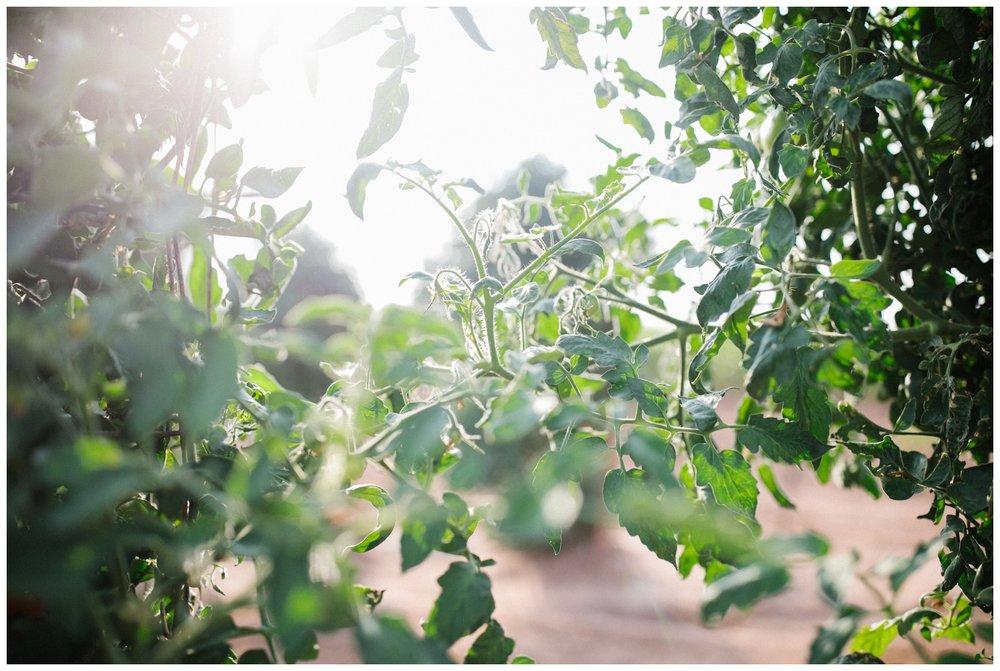 Reimer Farms__Lubbock Texas produce garden_33.jpg