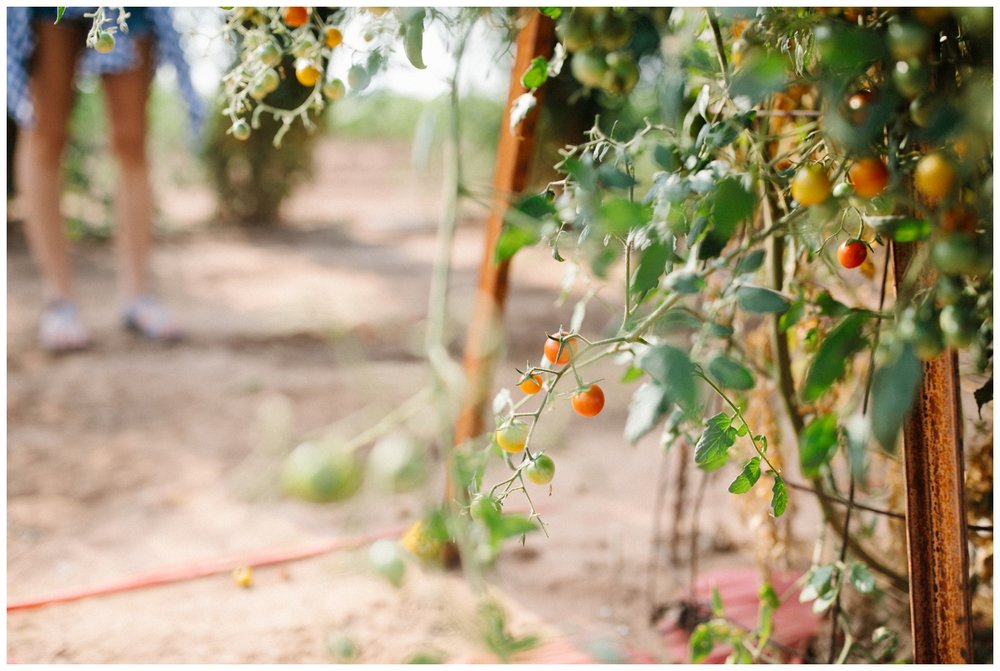 Reimer Farms__Lubbock Texas produce garden_34.jpg