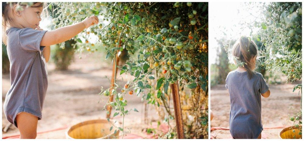 Reimer Farms__Lubbock Texas produce garden_35.jpg