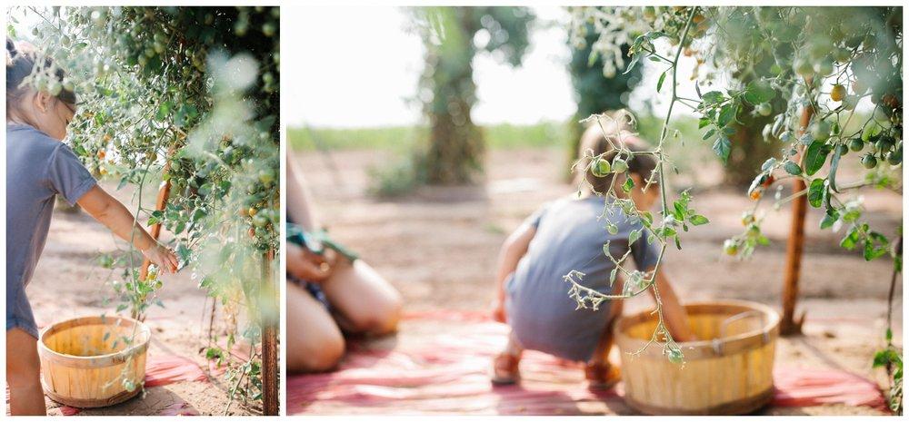 Reimer Farms__Lubbock Texas produce garden_38.jpg