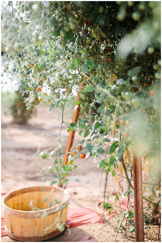 Reimer Farms__Lubbock Texas produce garden_37.jpg